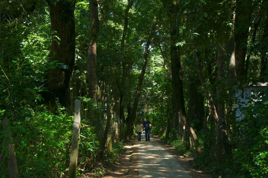 Forest in kathmandu, a picnic spot for families