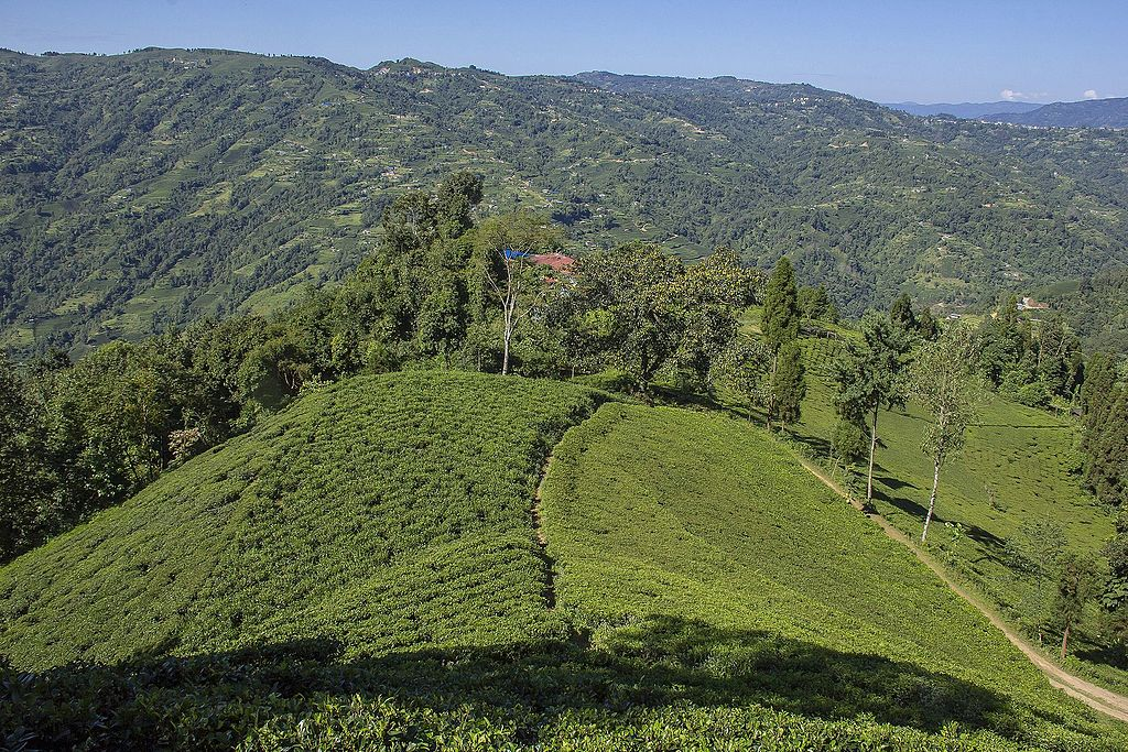 A view of Ilam in Nepal