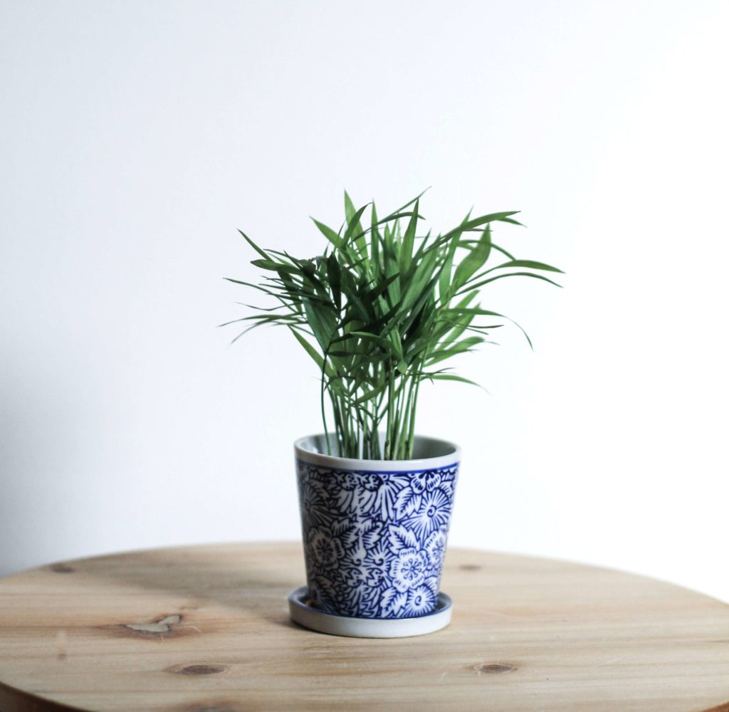 bamboo for your desk