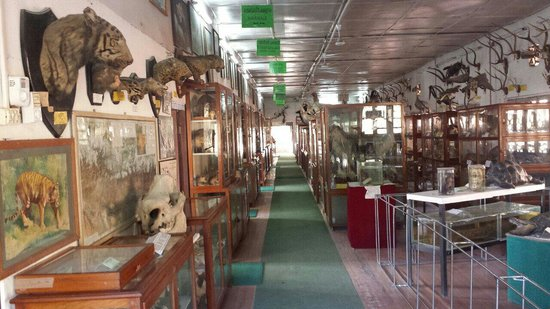 visit the natural history museum for a fun weekend in kathmandu